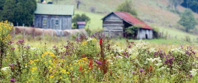 5ff-wildflowers