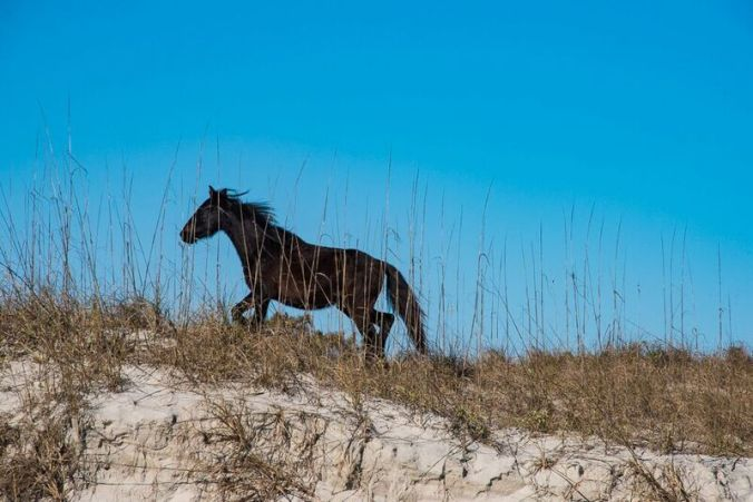 cumberland-horse