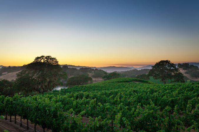 Sunset Wine Road