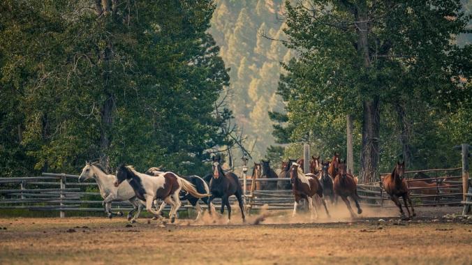 TRRC_HORSES4